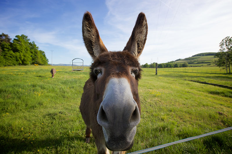 donkey with funny face