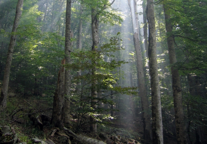 Photo of Biogradska forest in Montenegro with light coming through the trees