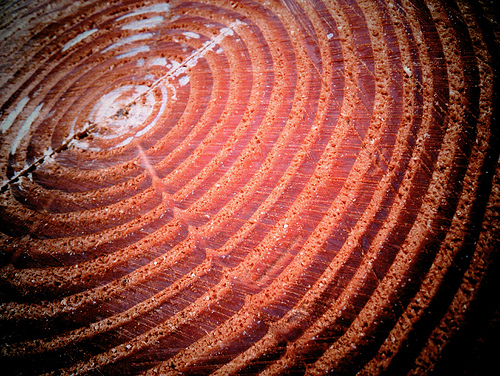 slice of a tree showing tree rings.