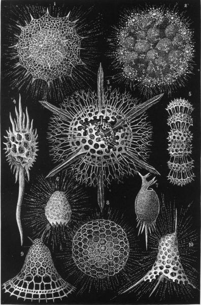 Microscopic shells made of opal produced by radiolaria, see caption