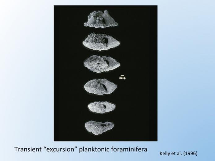Morphologies of planktonic foraminifera that lived for a short time during the Paleocene Eocene thermal maximum