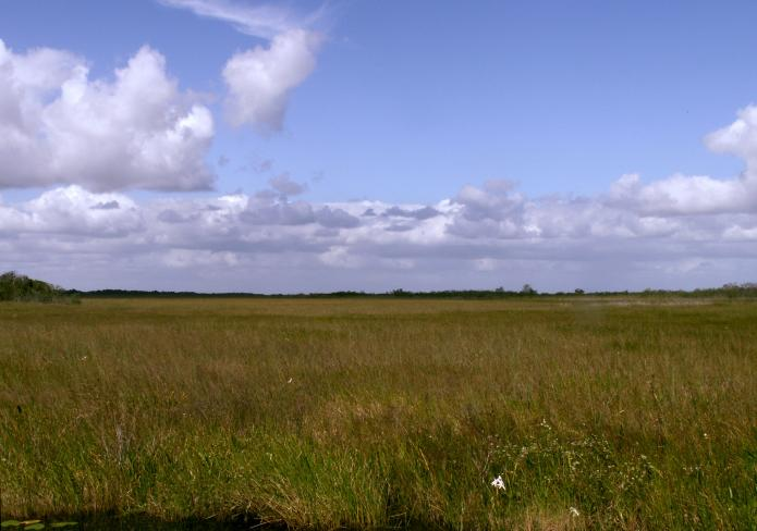 sawgrass prairie in the Everglades