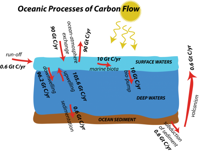 The marine carbon cycle earth 103 earth in the future illustration to show flows involved in the oceanic realm along with the flow magnitudes ccuart Choice Image
