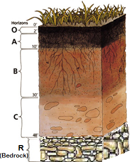 graphic of a soil profile with sections labelled (bottom to top): R, C, B, A, O
