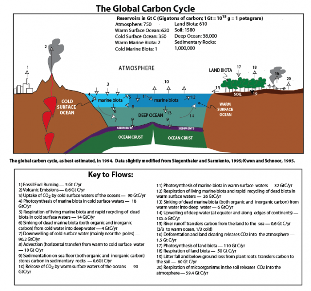 Diagram of the global carbon cycle, as best estimated, in 1994.