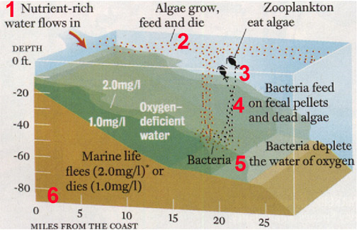 Diagram illustrating processes that control formation of hypoxic conditions in coastal environments