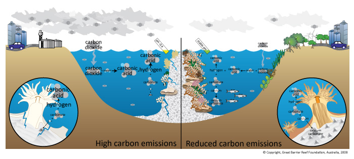Diagram showing impact of ocean acidification on coral reef ecosystems