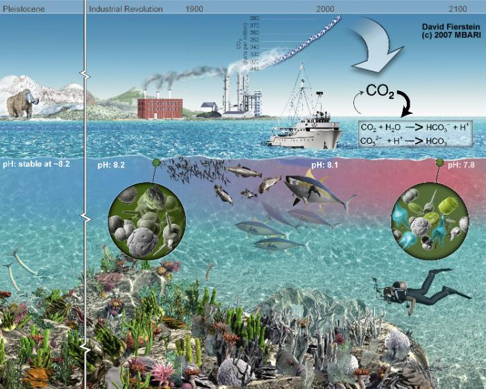 Image result for ocean acidification before and after