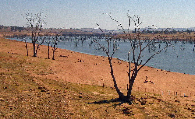 Dead trees in drought stricken Australian Outback
