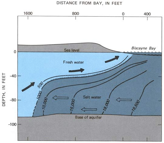Schematic showing origin of salt water intrusion into the Biscayne Aquifer in south Florida, see text below