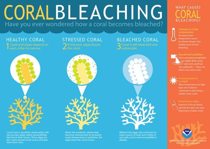 Coral Bleaching, see text description in link below