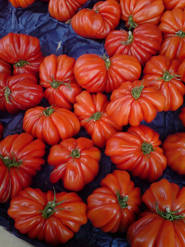 Genetically modified cooking tomatoes in France