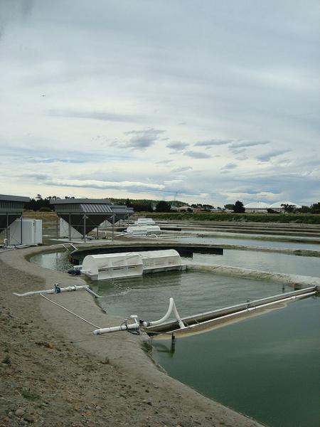 Plant in New Zealand that converts algae to biofuel