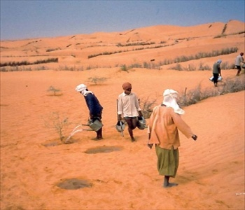People carrying water cans to water crops in a desert area of Africa.