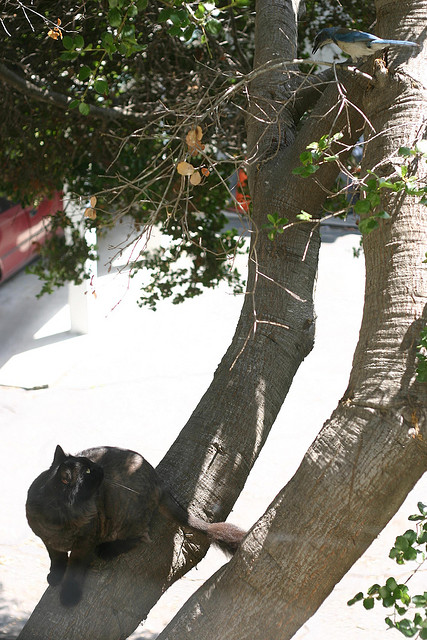 cat in a tree, stalking a bird