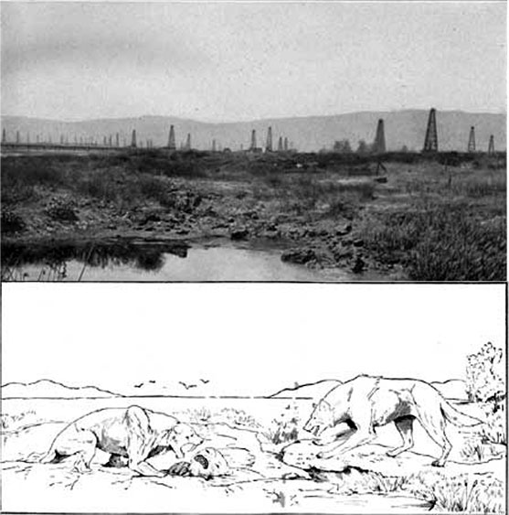 Top: Historical photo of tar pits at La Brea. Bottom: Reconstruction sketch of a saber-toothed tiger, sloth, and dire wolf.