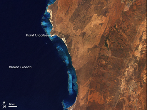 Australia's largest fringing coral reef, Ningaloo Reef, on western shore of Australia, described in caption.