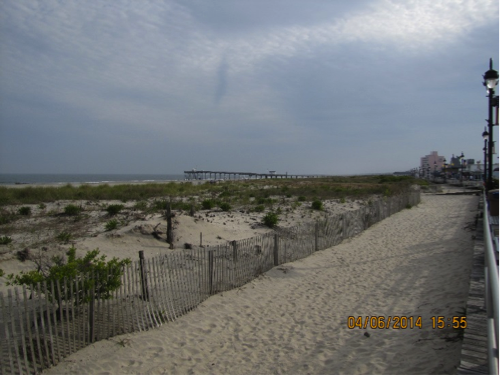 Vegetated and protected dune system at Ocean City New Jersey, United States, described in caption
