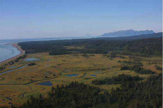 lake and salt marsh surrounded by forest