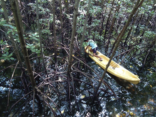 A yellow kayak in A very thickly wooded mangrove forest in Palawan, Philippines.