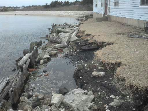 Shoreline erosion on mainland side of Chincoteague Bay, Virginia as result of Hurricane Sandy.