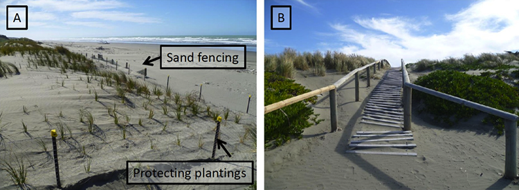 On left, view of recently planted vegetation on foredune and sand plain; on right backdune view of bushy vegetation, and walkways