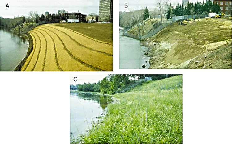 3 phases of streambank stabilization A) excavate undesirable material, B) add new topsoil, C) stream banks with lush vegetation