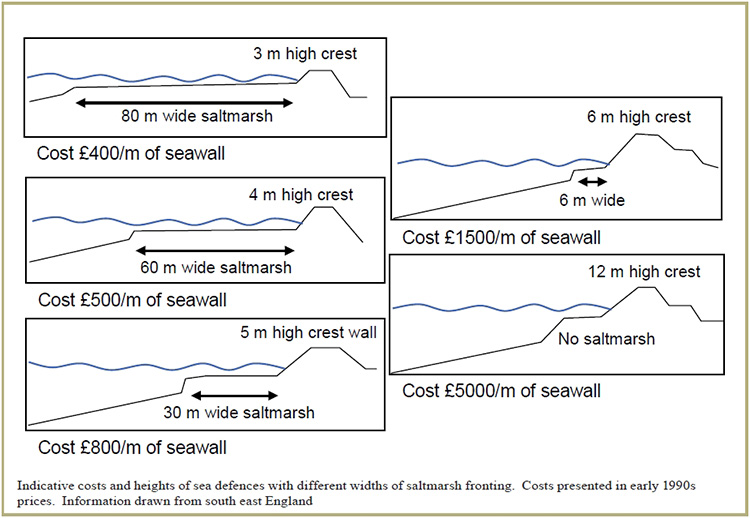 Ex. of costs of combination marsh restoration & sea wall construction, in pounds. Wider salt marsh = shorter crest, taller crest=more $