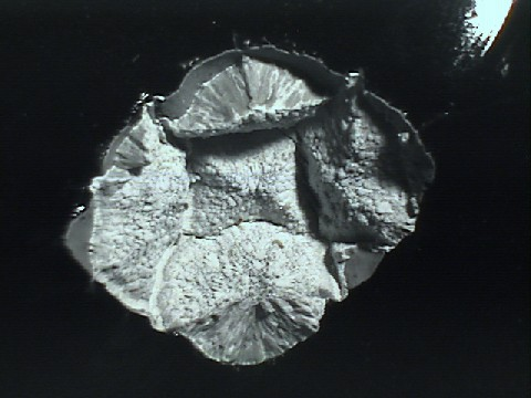 photomicrograph of cristobalite