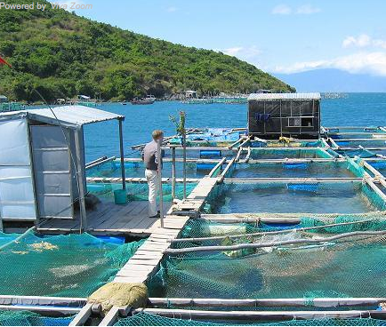 man standing on low dock above fish hatchery in the ocean