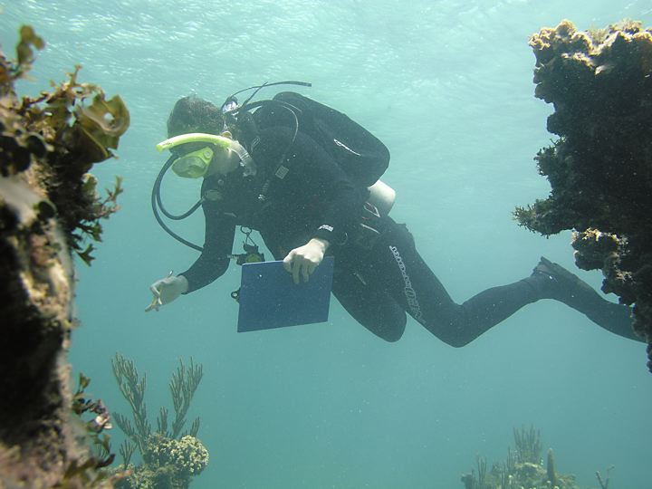 man  scuba diving. He is looking at the reef while holding a pen and clip board in his hand.