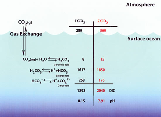 Diagram with calculations that describe how the increase in pCO2 ultimately decreases the saturation with respect to aragonite.