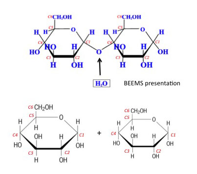 Hydrolysis reaction creating two glucose molecules, see caption and surrounding text