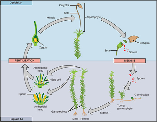 10.3 Algae Growth and Reaction Conditions | EGEE 439: