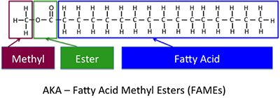 The chemical structure of the typical biodiesel, methyl ester fatty acid, or FAME. Methyl + ester+fatty acid