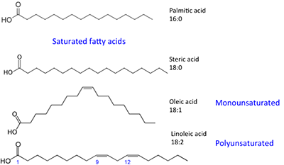 Palmitic & steric acid are saturated fatty acids. Oleic acid is monounstaturaed and Linoleic acid is polyunsaturated