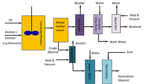 Schematic of biodiesel process using transesterification as described in the text