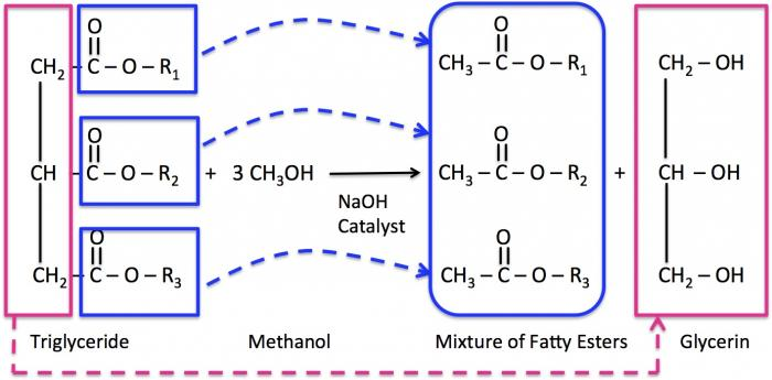 production of biodiesel by enzymatic transesterification Development, an ideal catalyst can indeed be develop for optimum production of biodiesel that economically feasible and environmentally benign for a better future keywords: transesterification, biodiesel, homogeneous catalyst, heterogeneous catalyst, and enzyme catalyst.