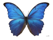 decorative image of a butterfly