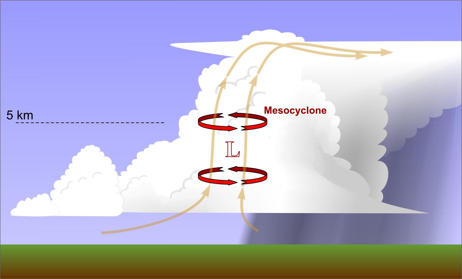 Diagram Of A Supercell Diagram Of A Apple ~ Elsavadorla