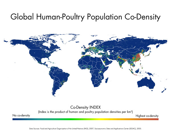 Global Humna-Poultry Population Co-Density. High in China and Europe