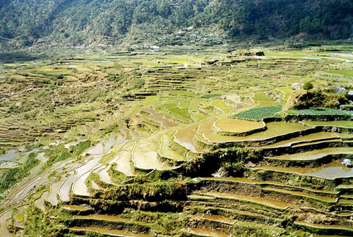 Picture of terraces on the hills in the Philippines. Areas of the hill are flattened, looking like large stairs.
