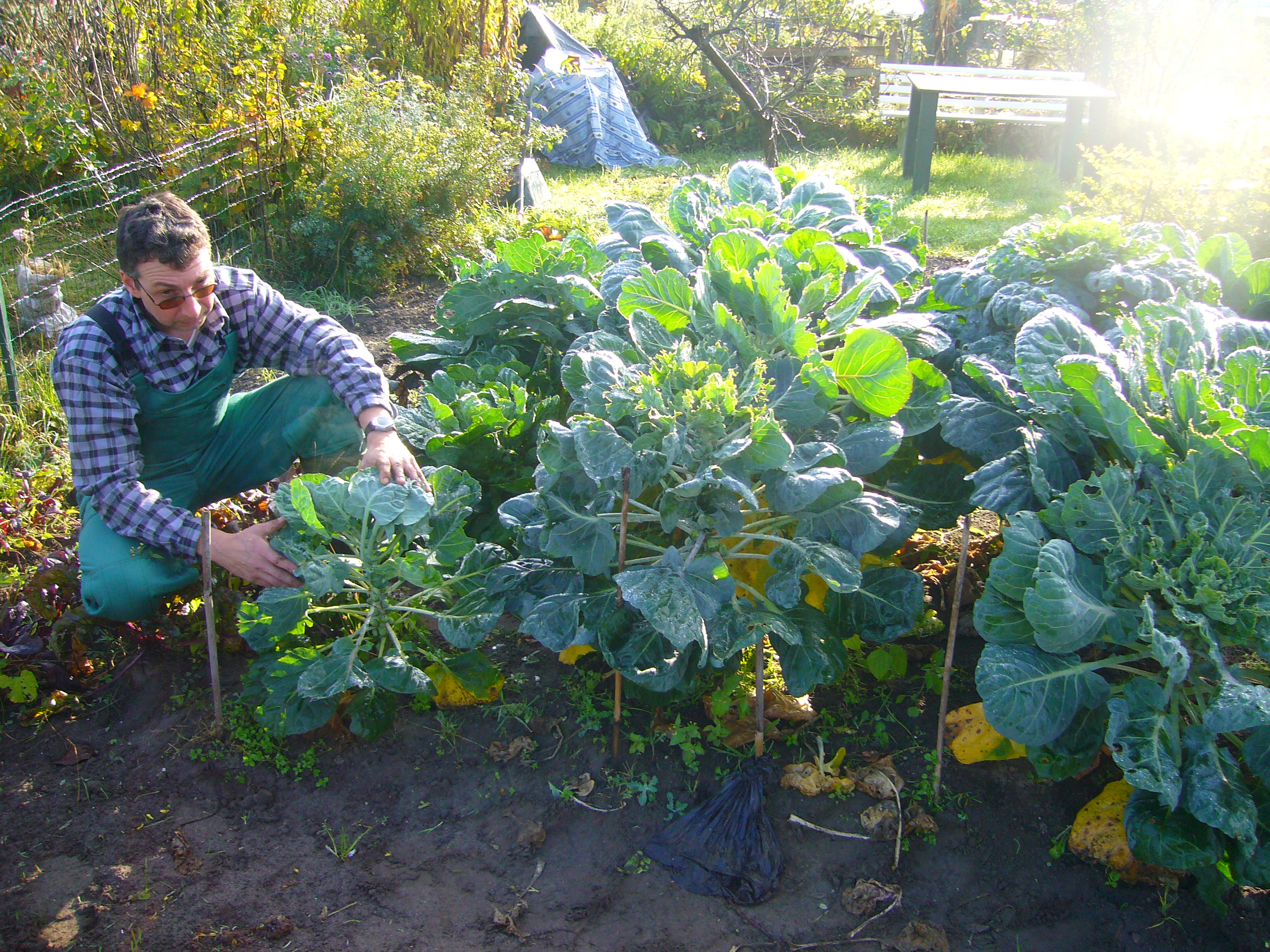 A farmer in a field using organic fertilizer