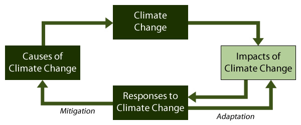 The climate change flowchart, with Impacts of Climate Change highlighted