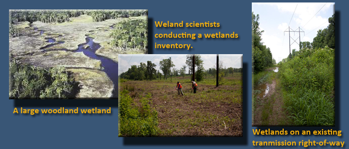 3 images: a large woodland wetland,  wetland scientists conducting a wetlands inventory & wetlands on an existing transmission right-of-way