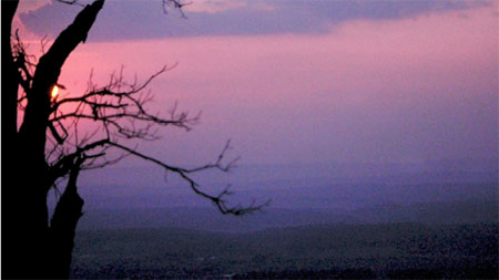 sunset over the Appalachian Mountains with a tree in the foreground.