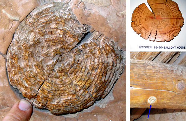 Three pictures.  2 logs from Long House used for tree-ring research and a museum specimen of a tree ring.