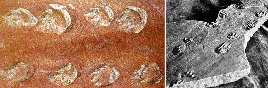 pictures of fossil tracks in Coconino fossil sand dunes.  1.  Lizard track way.  2.  Sample from Hermit Trail.