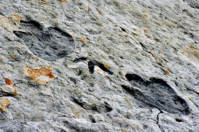 Close up of fossilized dinosaur foot prints from Dinosaur Ridge, CO.