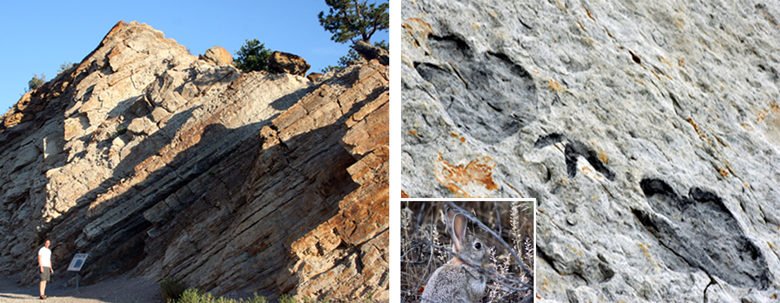 2 images.  1.   Outcropping of rock that has been tipped up as the Rockies were formed.  2.  Fossilized dinosaur prints.